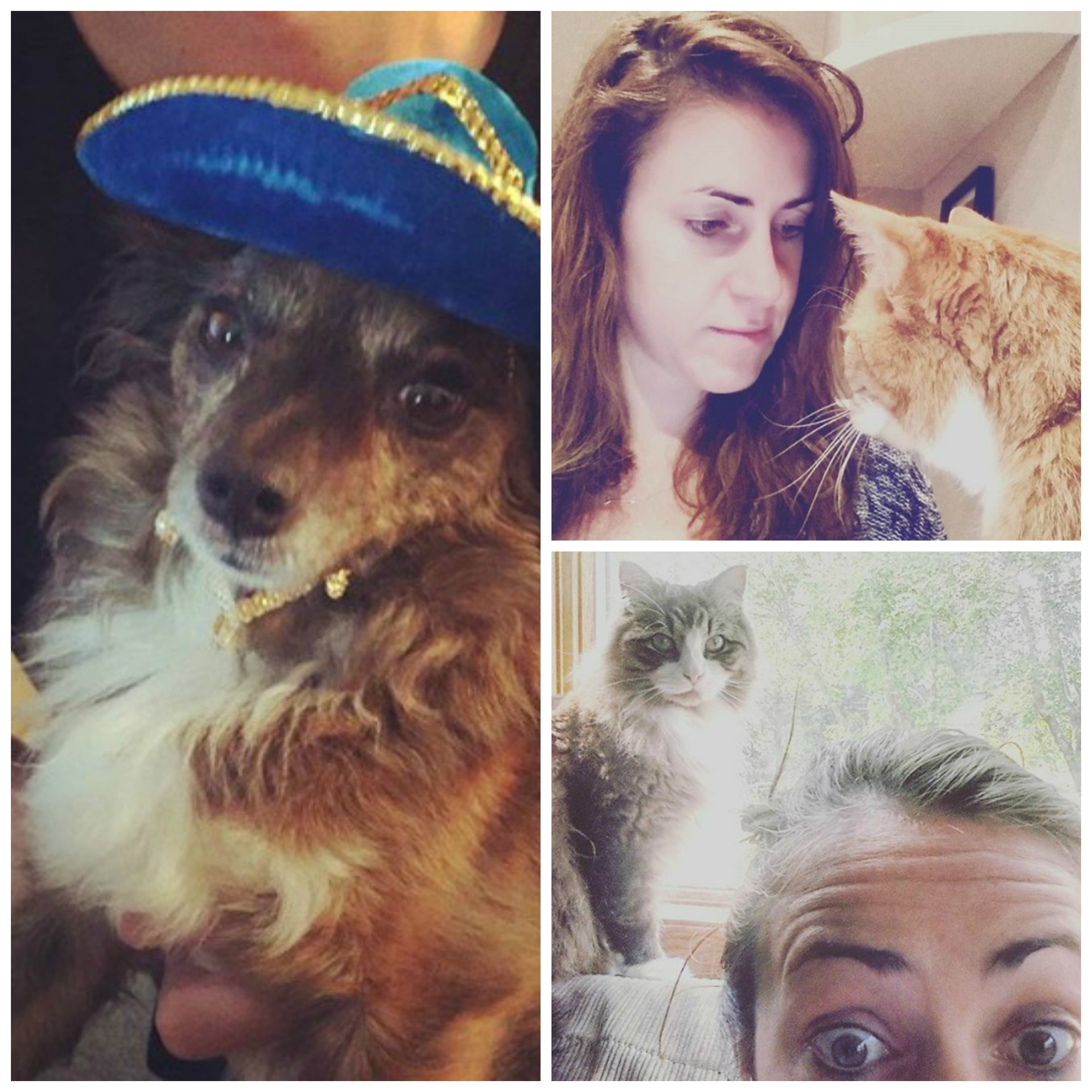Amy Baker pets